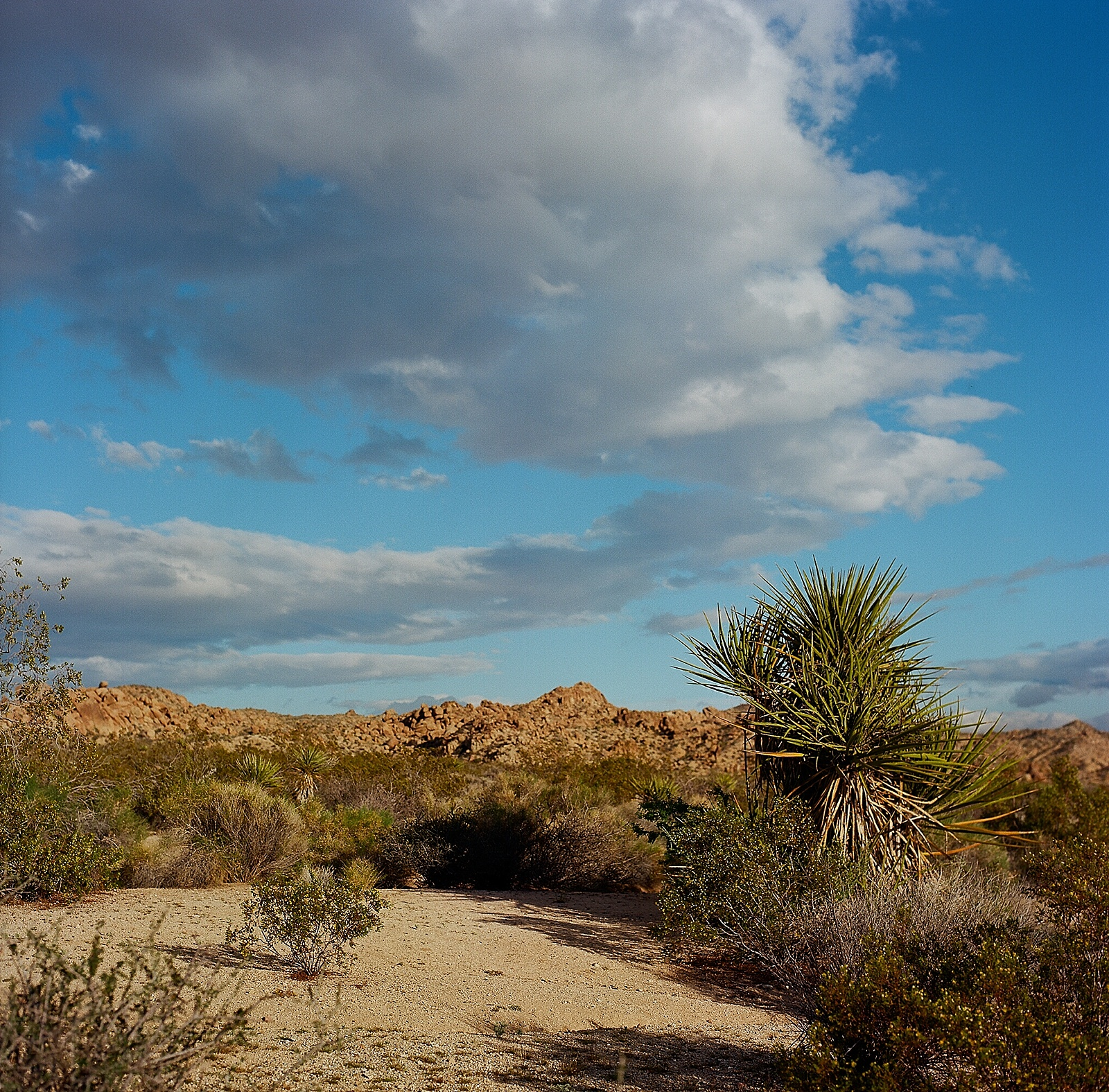 Joshua Tree landscape photography on Ektar film by San Diego portrait photographer Lauren Nygard