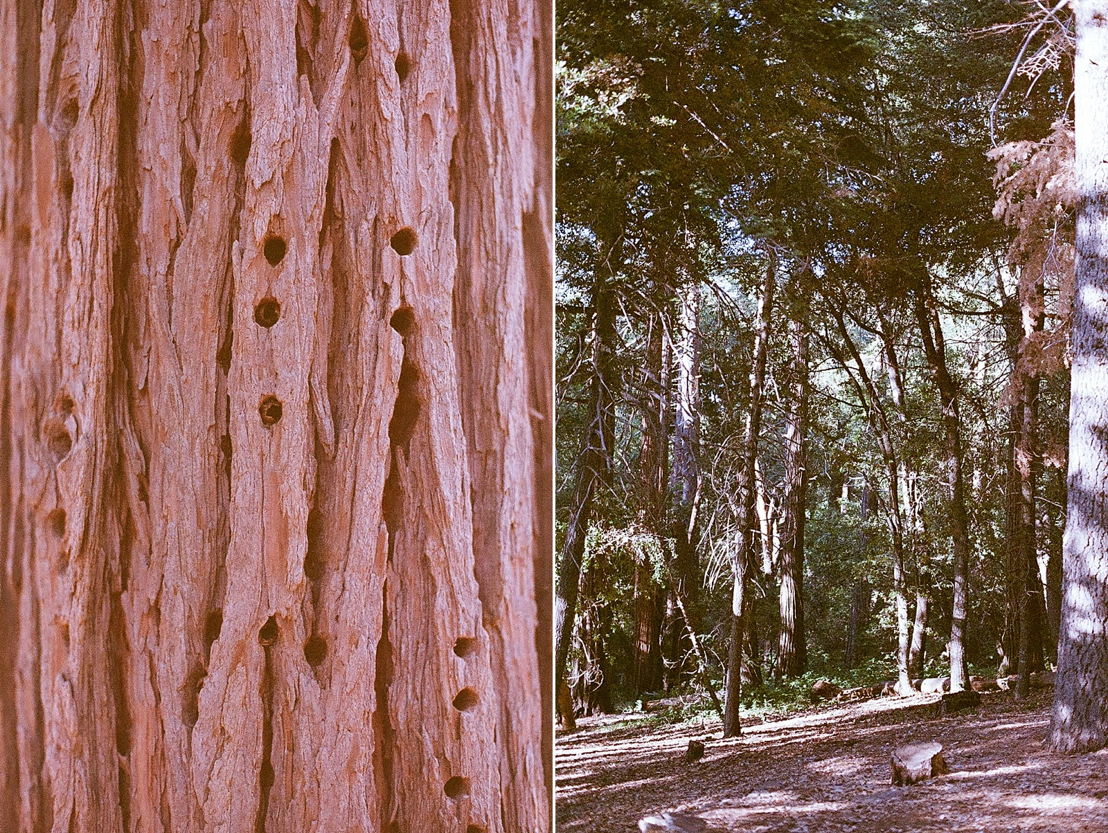 camping with seattle film works-002