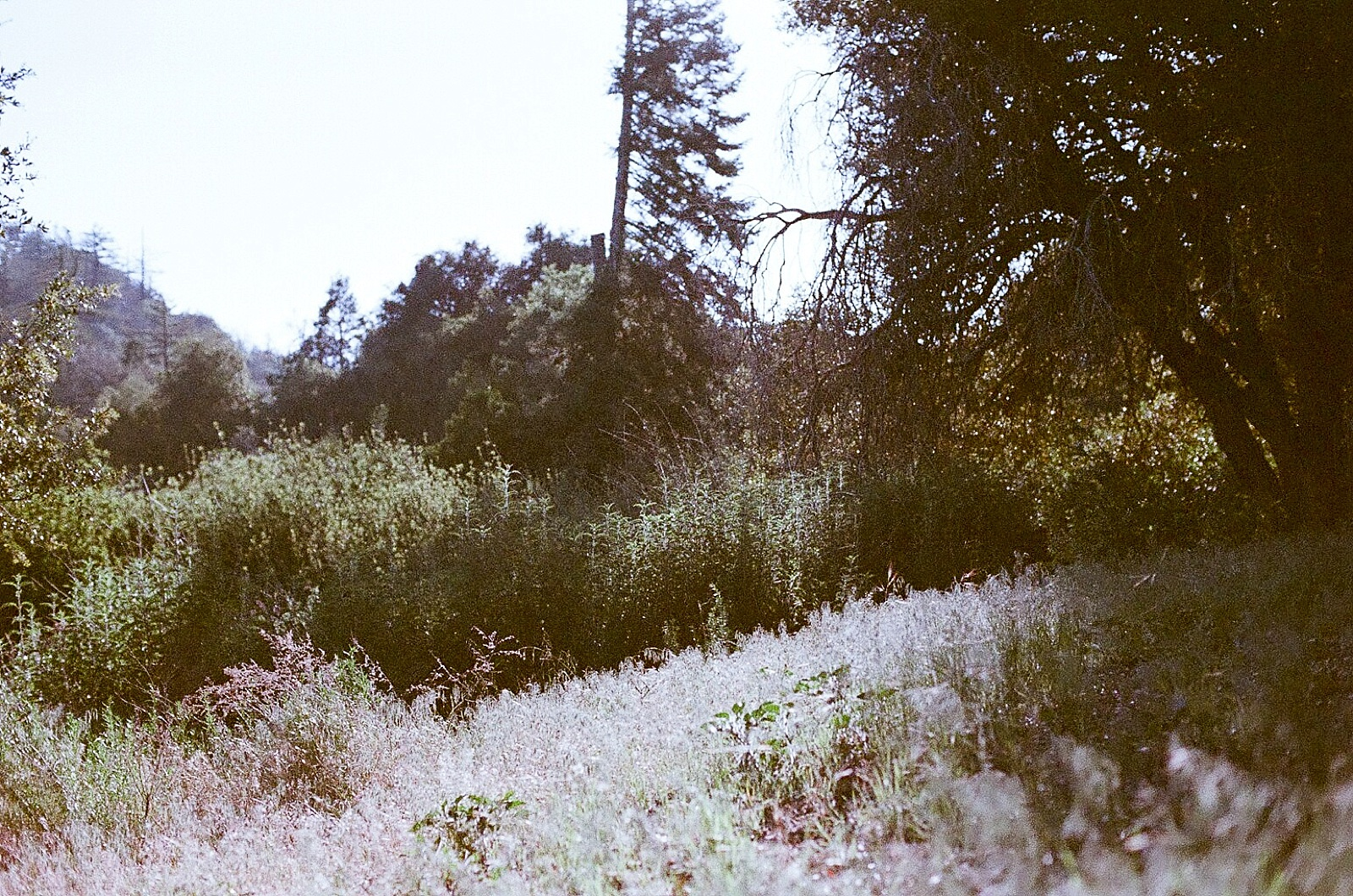 camping with seattle film works-015