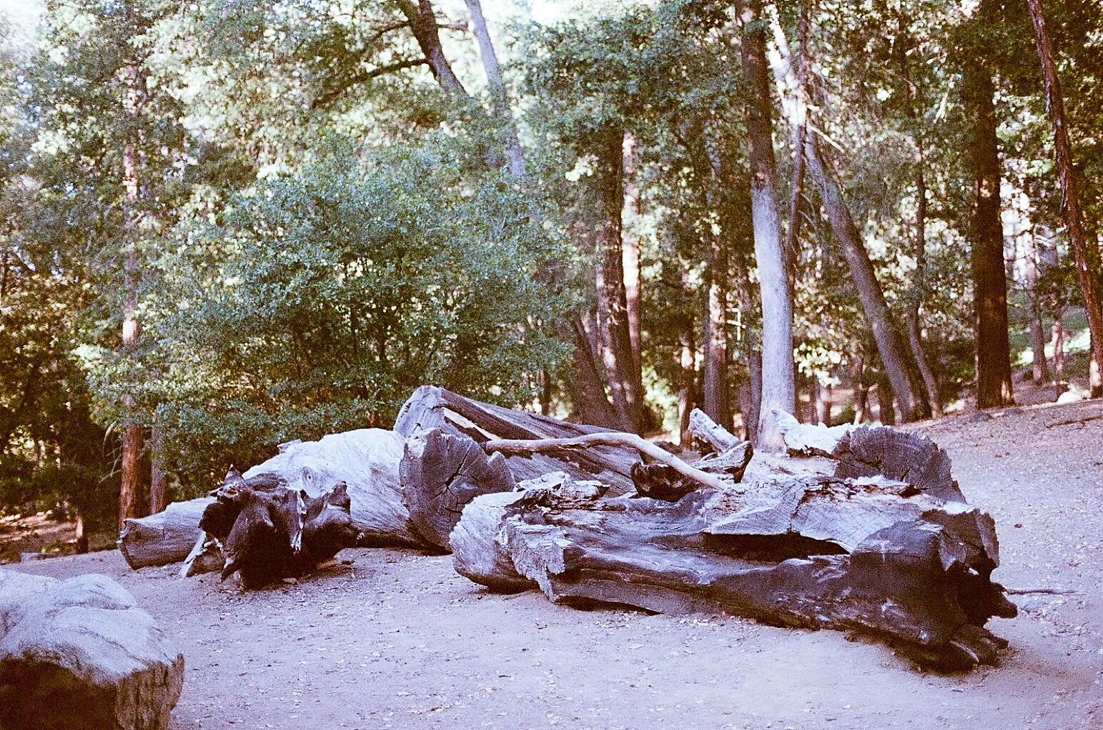 camping with seattle film works-021